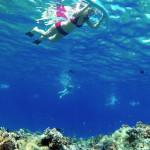 maui snorkel
