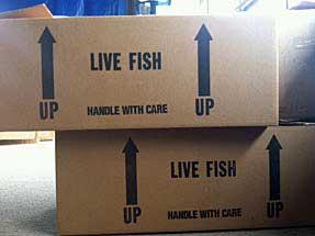live_fish_box