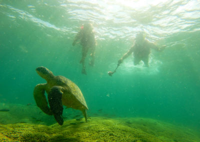 holokai_turtle3