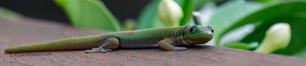 Madagascarian