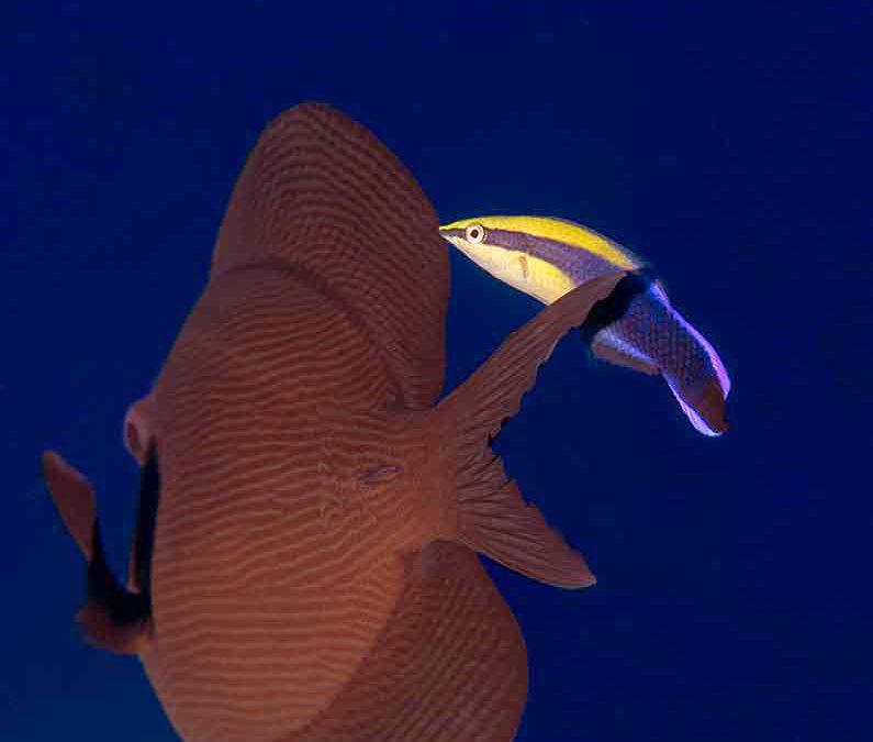 Reef Tableau