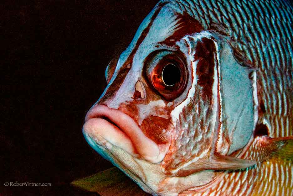 Saber Squirrelfish on the Political Stage