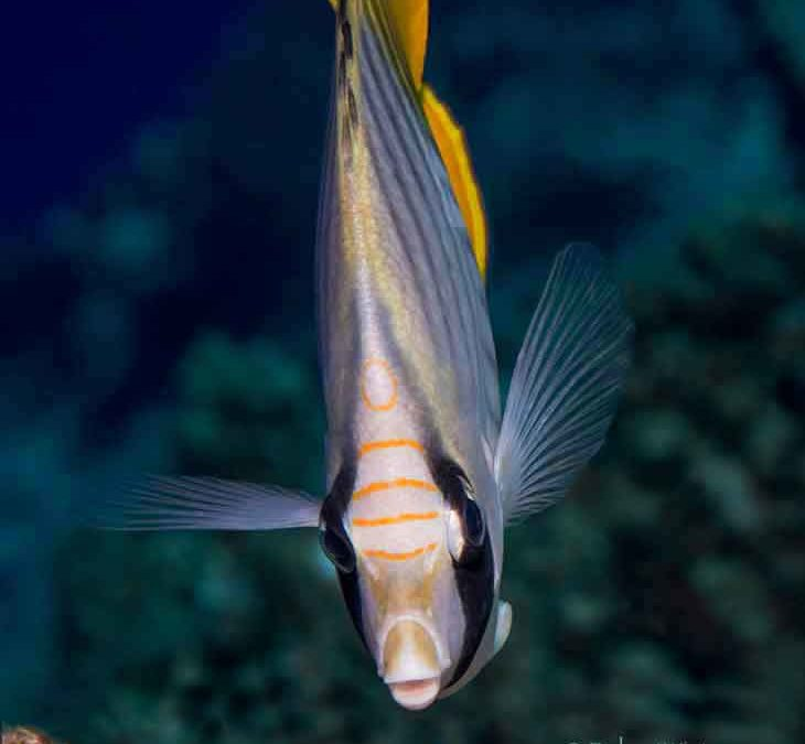 Threadfin Confidential: