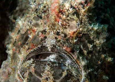 frogfish-responds