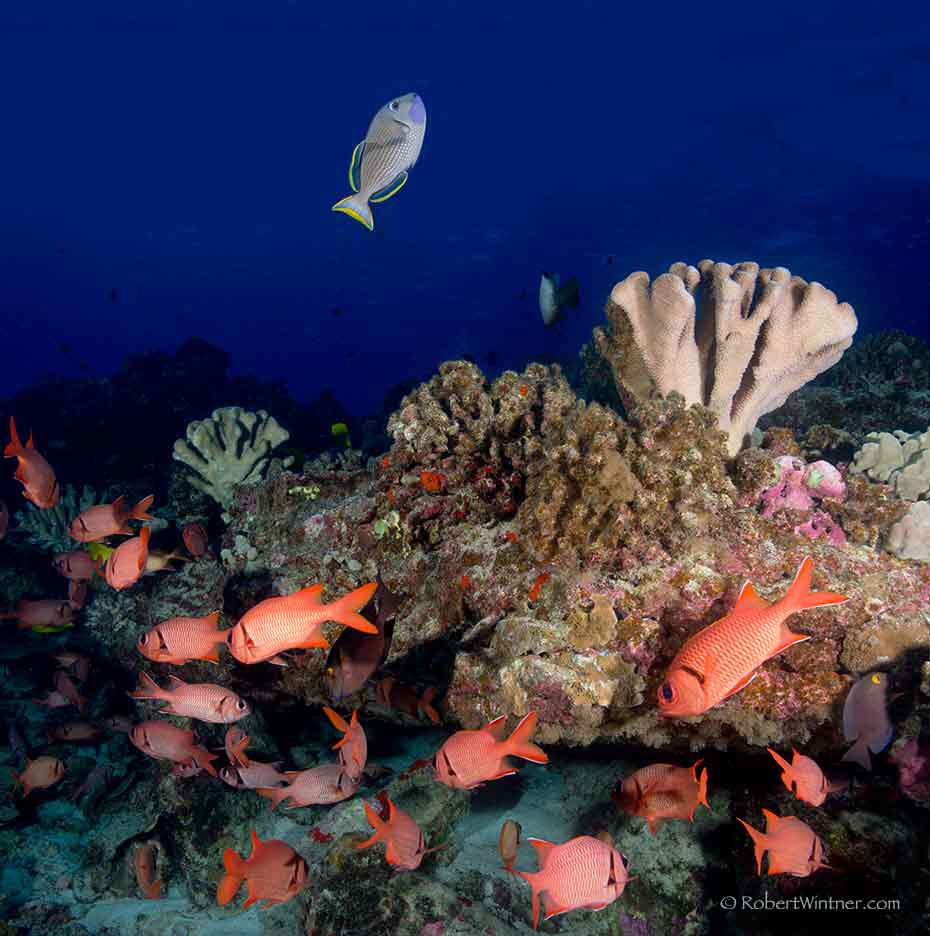 Coral Klatch At Reef's End