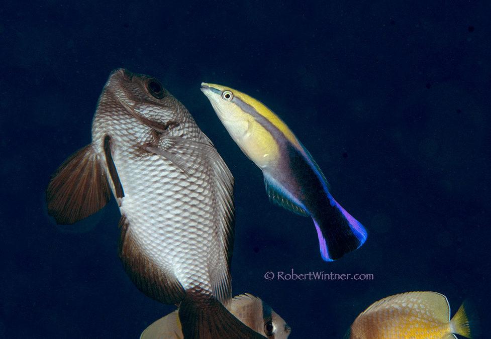 Reef Intramural