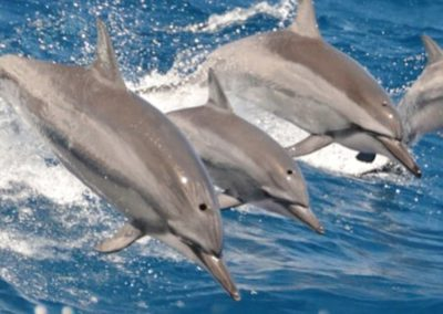 dolphin_excursions1