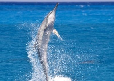 dolphin_excursions3