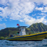dolphin excursion oahu
