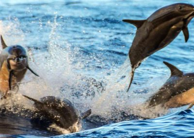 dolphin_excursions8