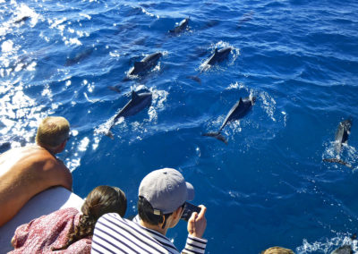 Maui magic dolphins2
