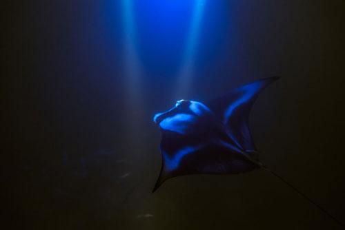 manta-nightime