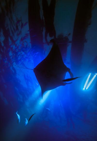 manta-ray-scuba-dive