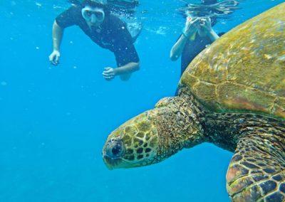 turtle-snorkeler