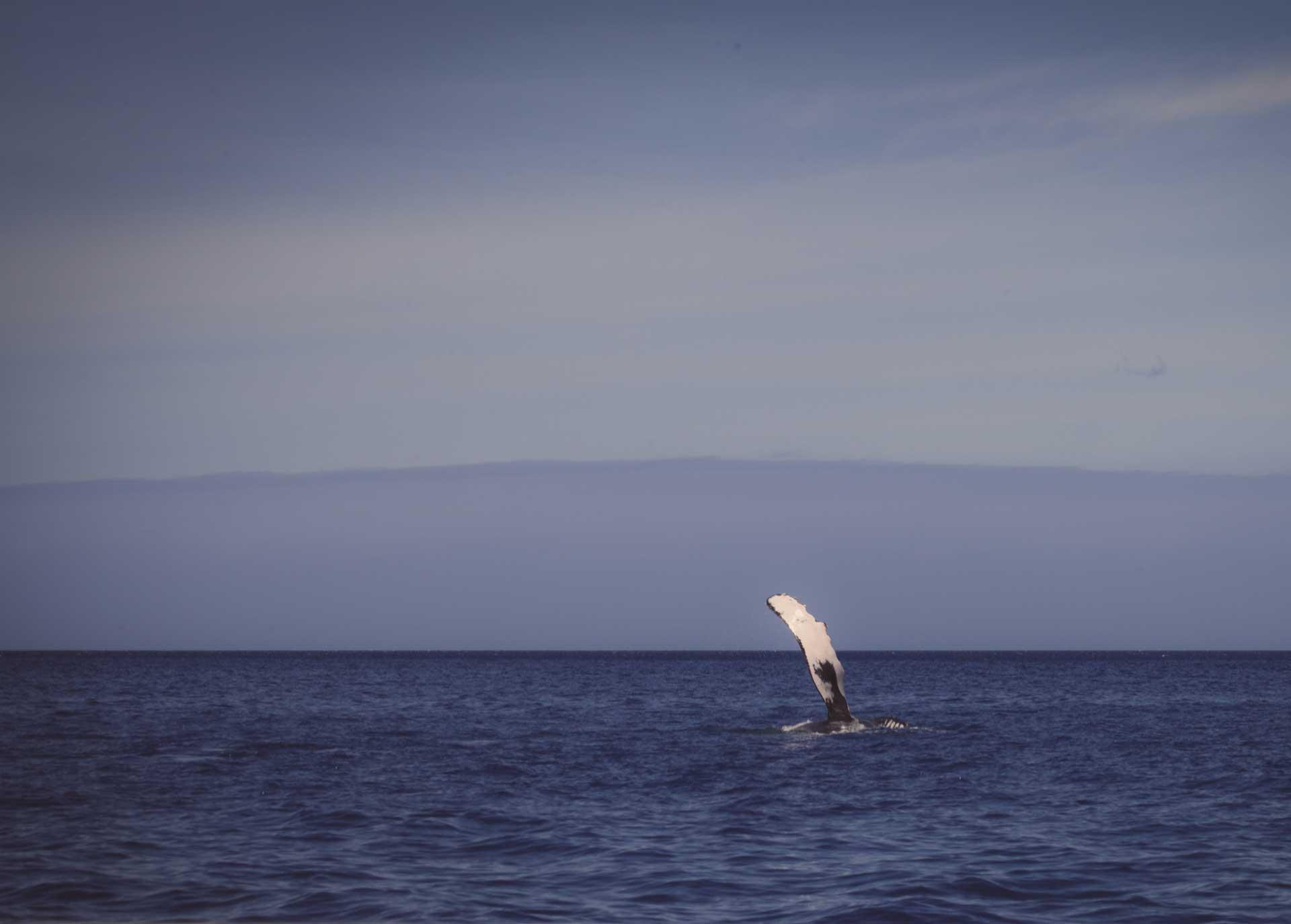 oahu whale watch